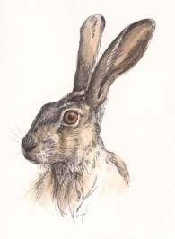 brown-hare-reszied-for-website