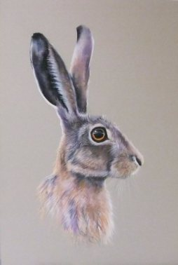 donald-th-resized-for-websitee-hare-dscf6071