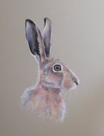 horace-th-resized-for-websitee-hare-sold-to-corrina-4th-august-2017