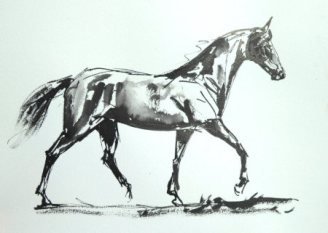 horse-ind-resized-for-websiteian-ink-sketch-2017