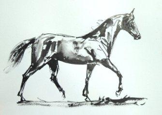 horse-ind-resized-for-websiteian-ink-sketch-2017