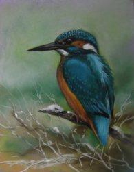 kingfishe-resized-for-websiter-cropped