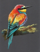 Bee Eater on Black for website
