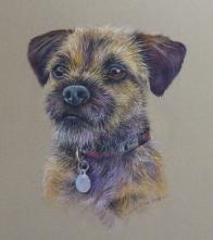 Border terrier for website