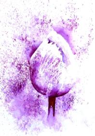 Brusho tulip resized 2018 for website